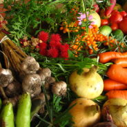 Organic Agriculture Students Sell Vegetables at Farmers Market