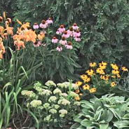 Garden upgrades 2018