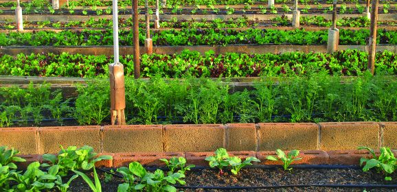 Dylan Hanneman—Independence Through Agriculture and Sustainable Building